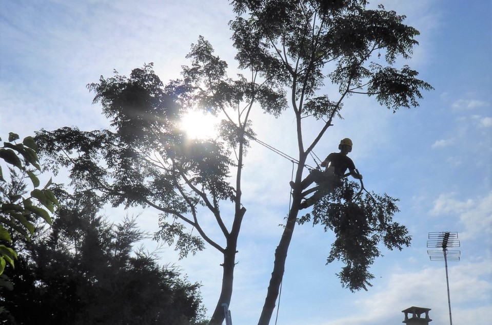 arbotannique elague un arbre