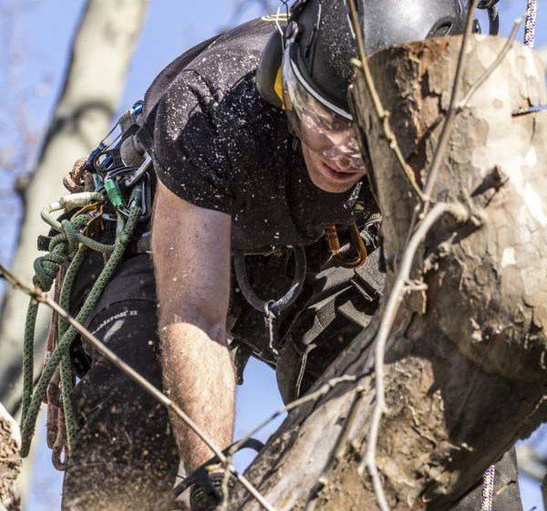 Arbotannique decoupe dans un arbre