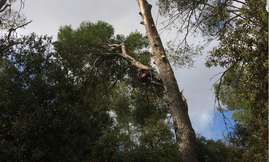 arbo'annique elagague un arbre a quelque metre de haut